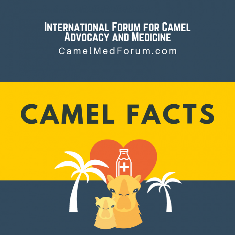 Nutritional Facts About Camel Milk